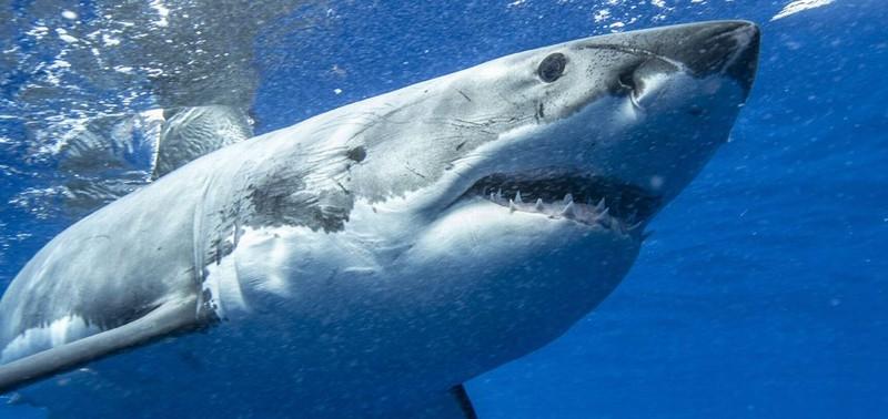 サメの生態