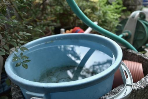 バケツの水を庭先に放置するとボウフラがわく