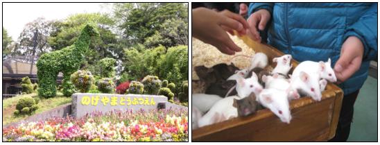 野毛山動物園のふれあい広場ではハツカネズミ